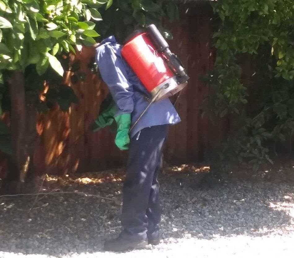 Pest Control in & near Menifee, CA