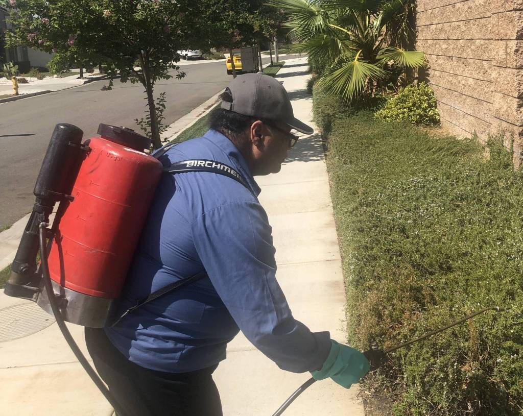 Pest Control Services in & near Menifee, CA