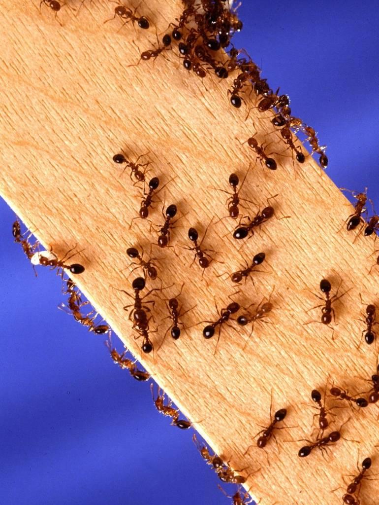 Pest Exterminator in and near Menifee, California