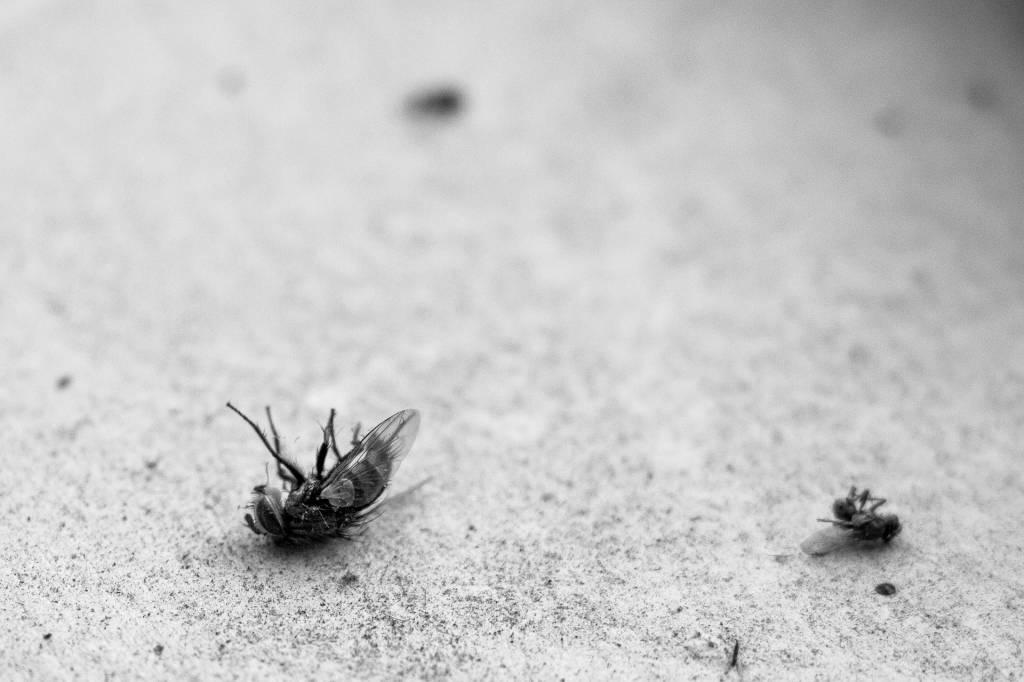 Pest Exterminator in & near Menifee, Ca