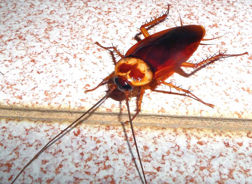 Pest Proofing in and near Menifee, Ca