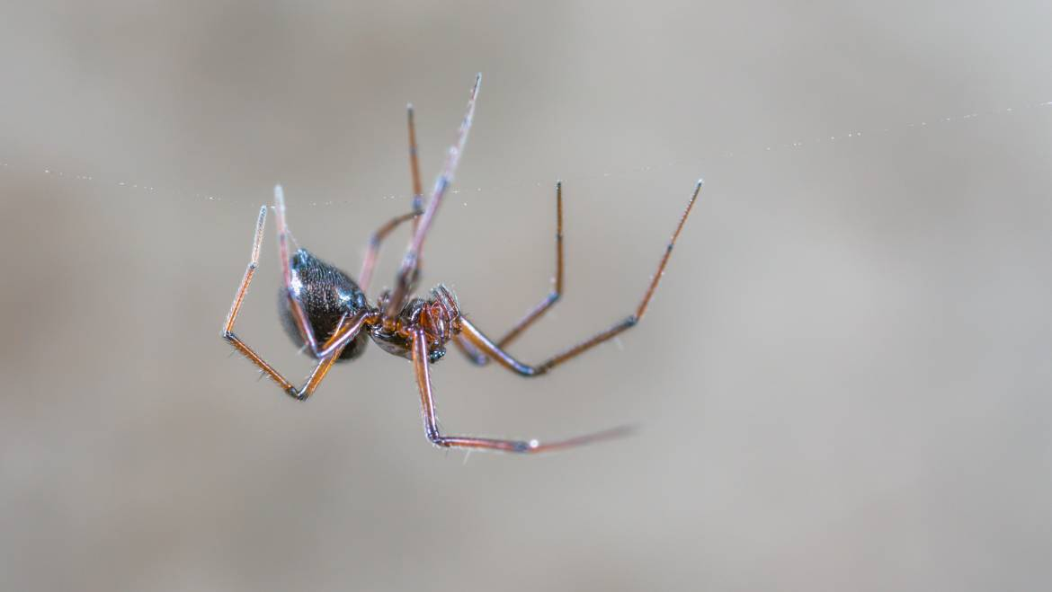 Will Pest Control Get Rid of Spiders?