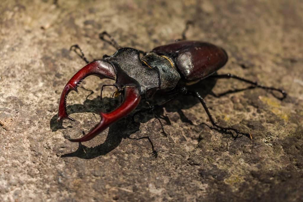 Beetles Removal Menifee, CA