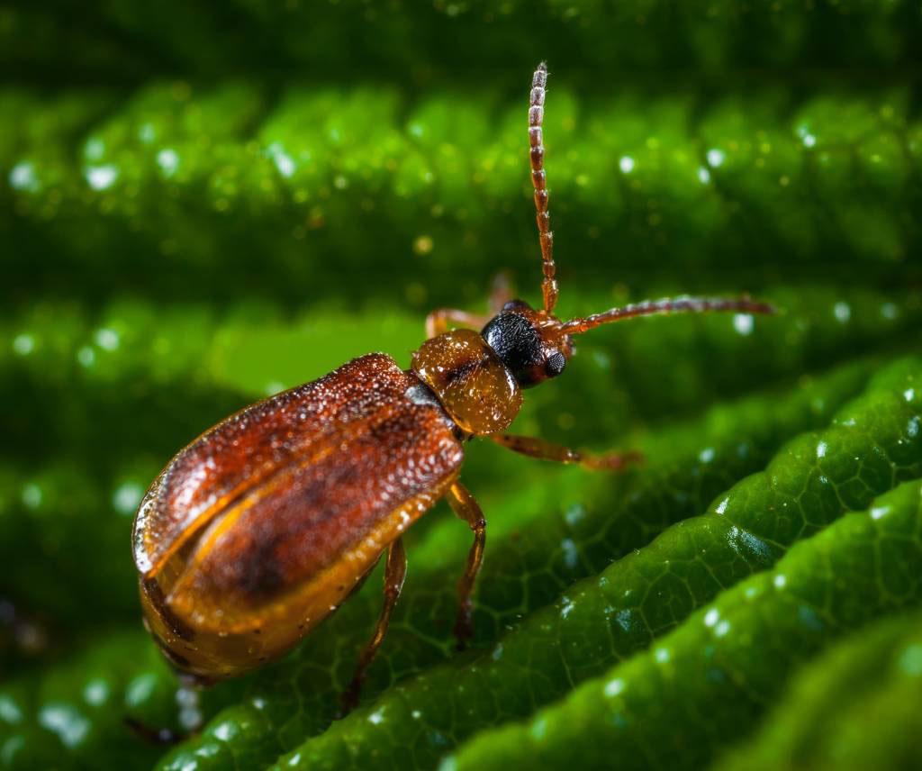 Beetles Removal Menifee