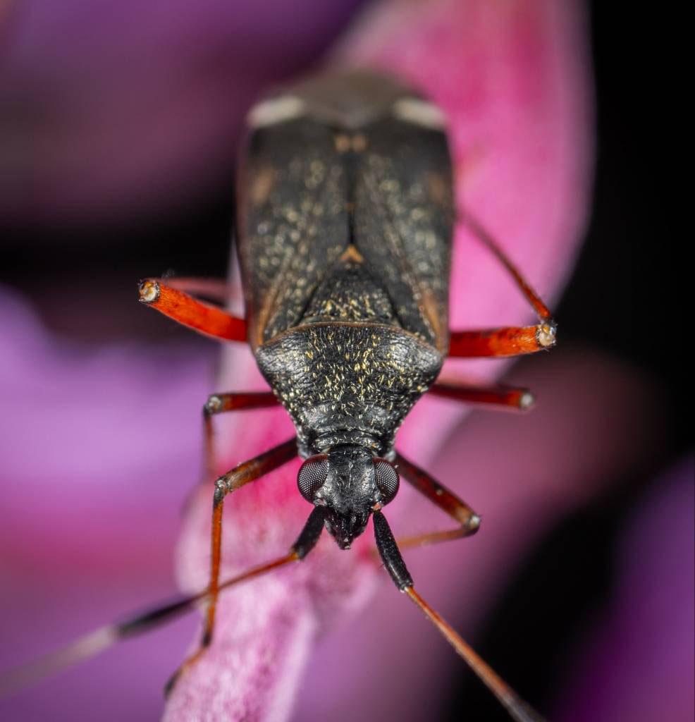 Beetles Removal