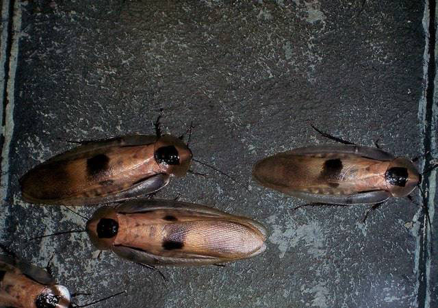 Roach Treatment in & near Menifee, California