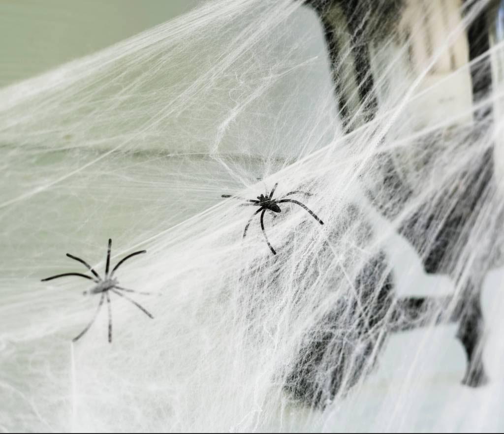 Spider Control Menifee