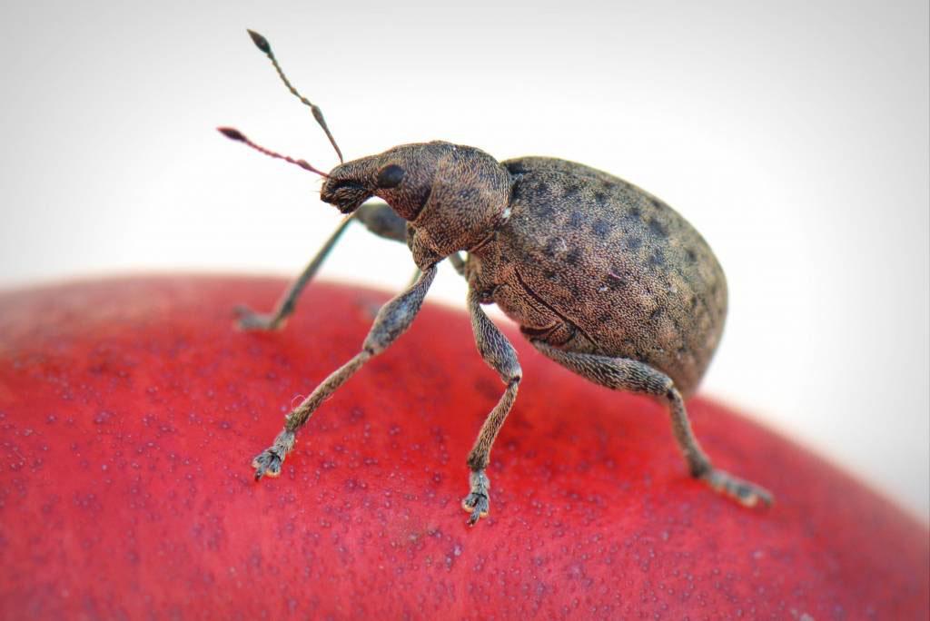 Exterminator Services in & near Menifee, CA