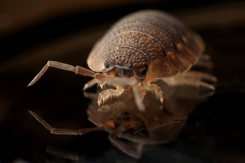 Bed Bug Control in & near Menifee, CA