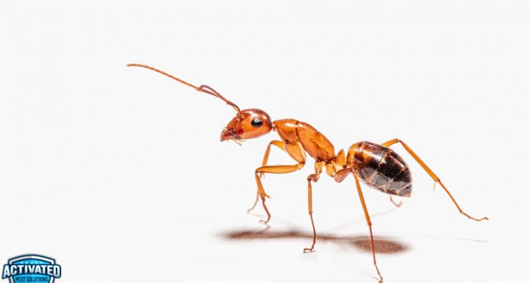 Why Ants Suddenly Appear in Home and How to Get Rid of Them