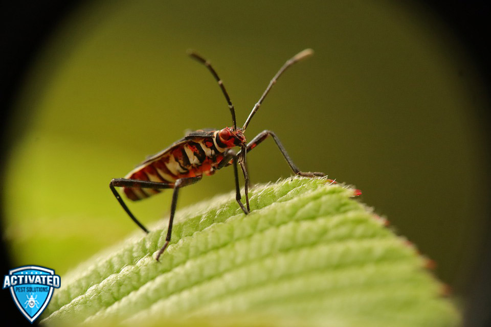 Is Your Home Infested with Bed Bugs?