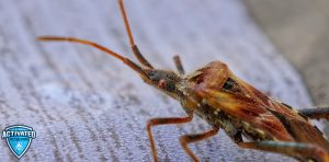 How to Kill and Get Rid of Bed Bugs