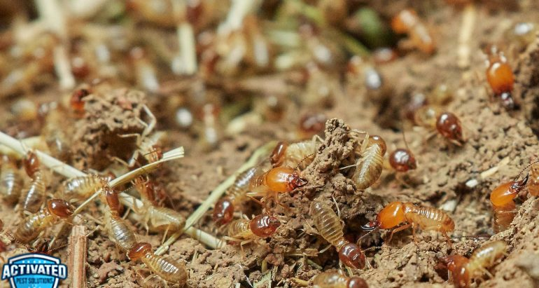Are You Facing a Termite Infestation at Home? Assess the Severity of the Invasion and Take Proper Action to Get Rid of Termites Immediately