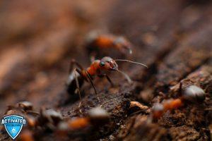 Ants in winter