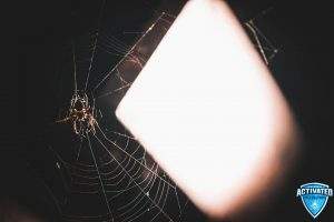 Spider in winter