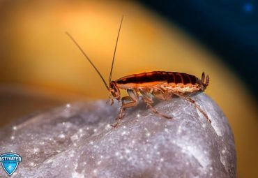8 Reasons to Get Professional Cockroach Control Services