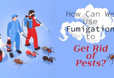 How Can We Use Fumigation to Get Rid of Pests?