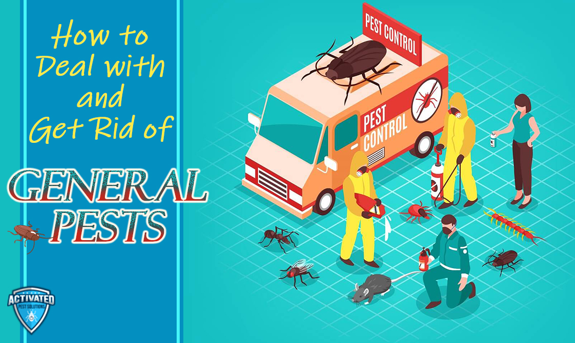 Are You Facing a Pest Problem? How You Can Get Rid of General Pests.