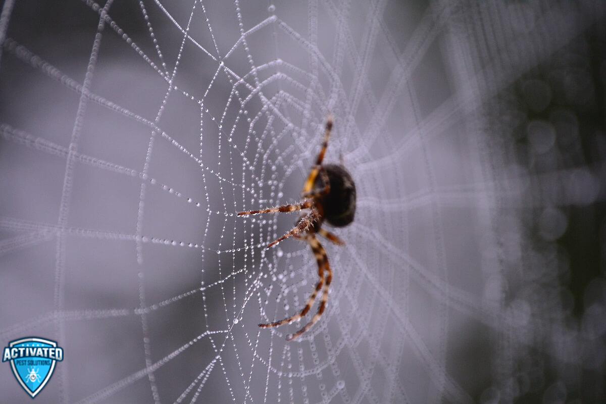 Get Rid of Spiders- Menifee